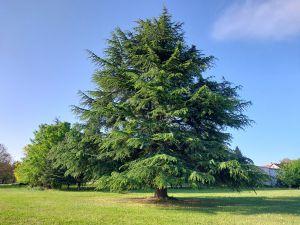 Les gites mirebalais g tes mirebeau vienne for Amenagement jardin 250m2