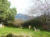 Holiday rentals in the Corsica mountain.