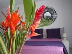 Holiday accommodation on Guadeloupe Island