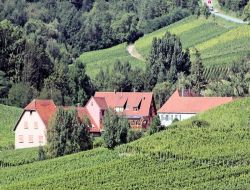Holiday home in Alsace, France. near Obernai