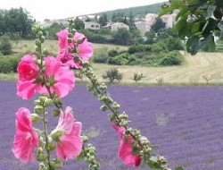 Holiday rental in Banon in Haute Provence