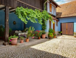 Holiday home in wine sector of Alsace, France. near Obernai