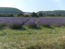Gîte a louer en Haute Provence.