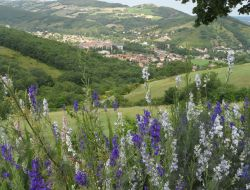 Holiday accommodation near Millau in Aveyron. near Saint Maurice de Sorgues